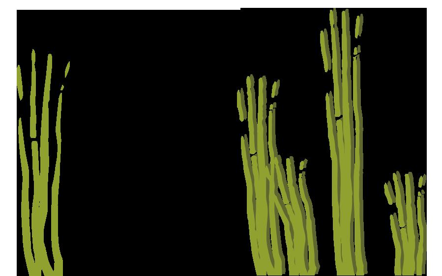 LINA. Plantas